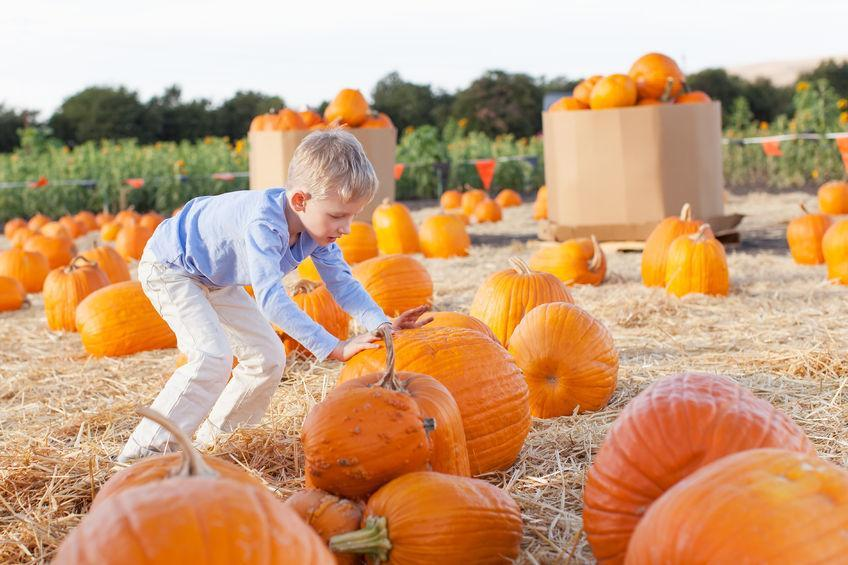 Family Friendly Events in Calgary This Fall