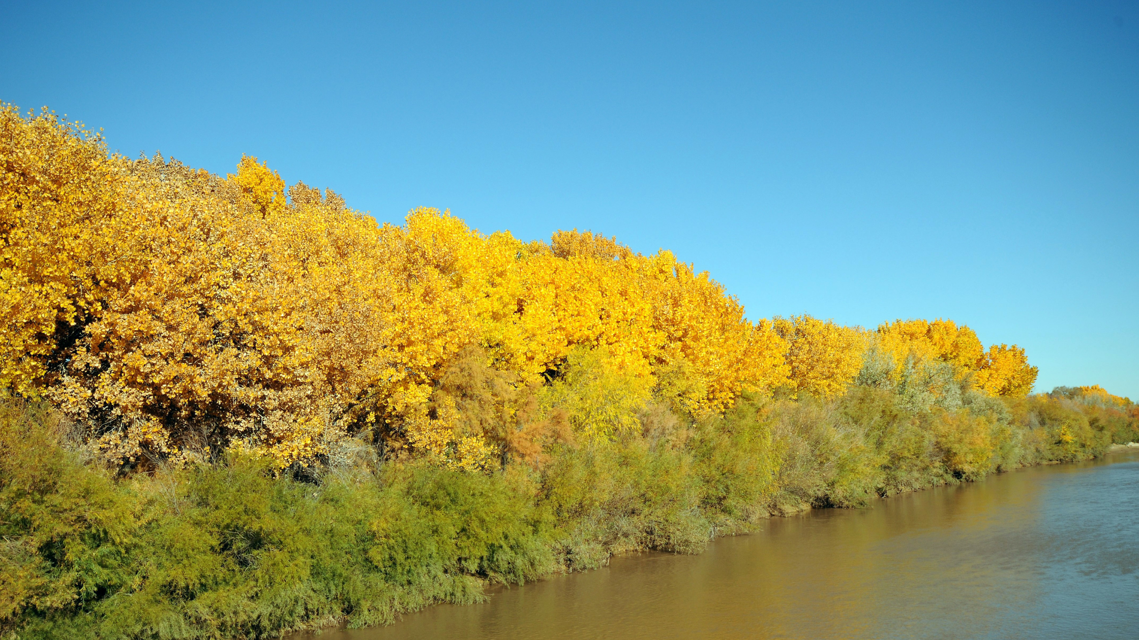 Where to see fall colors in New Mexico Rio Grande Bosque