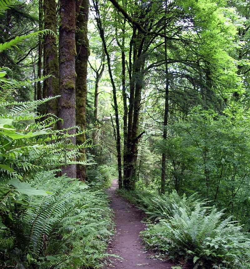 Forest Park neighborhood of Portland.