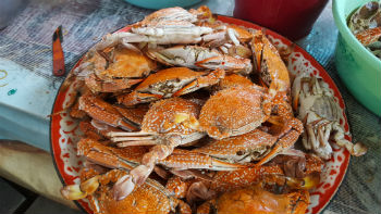 ocean-city-steamed-crabs