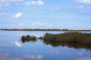 prime-hook-marsh