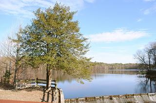 Trap Pond State Park - Image Credit: http://www.flickr.com/photos/leecannon/6854180481/