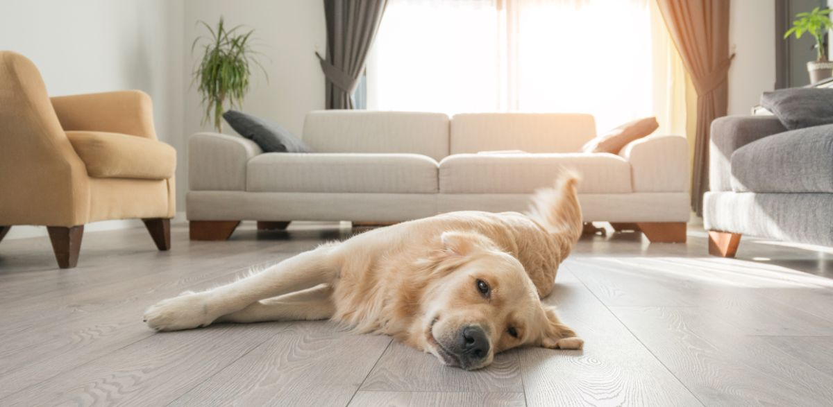 Removing Pet Odors From Your Home