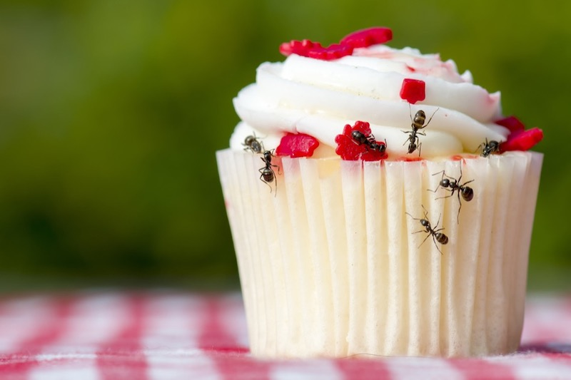 Things That Attract Ants to Your Home