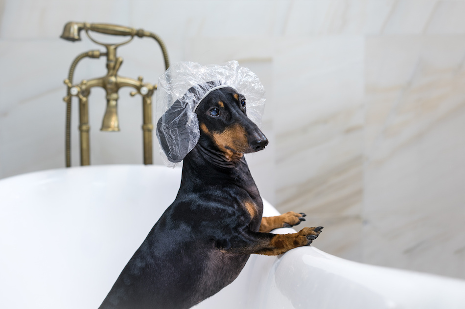 Pet Bathtub Safety