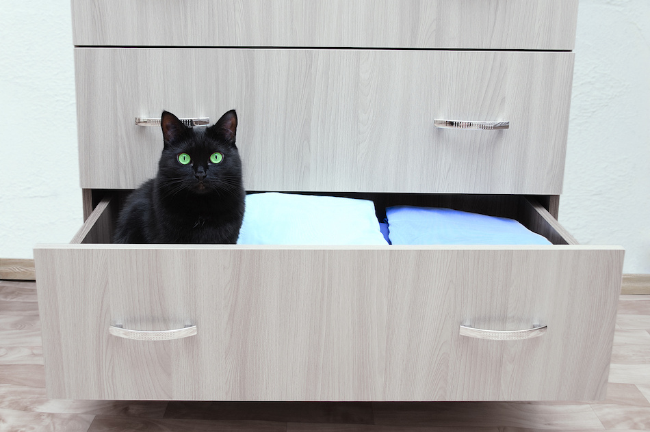 Pets in Open Bedroom Drawer