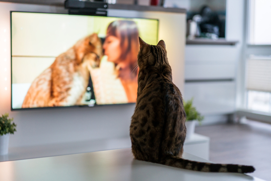 Pet TV Safety