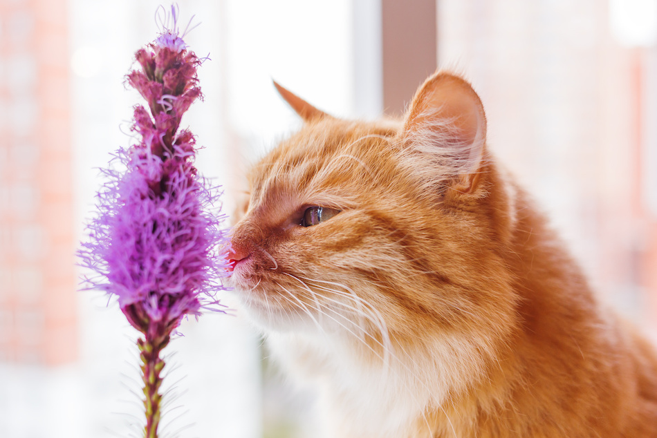 Safe Indoor Plants for Pets