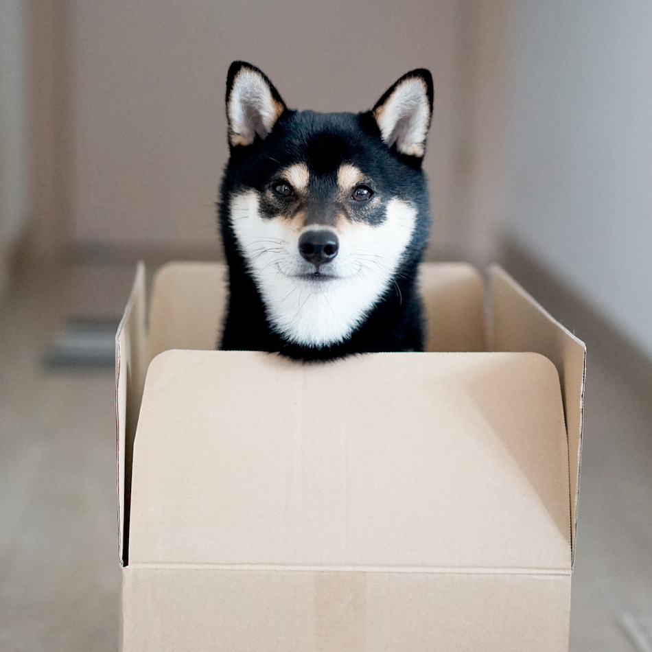 Dog Getting Into Box