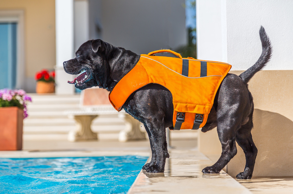 Keeping Dogs Safe Near the Pool