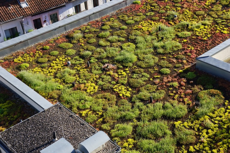 Solving Urban Heat Islands With Green Roofs