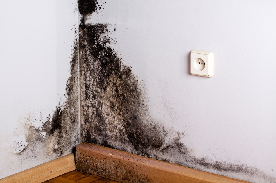 Everything to Know About Mold and Mold Growth in the Home