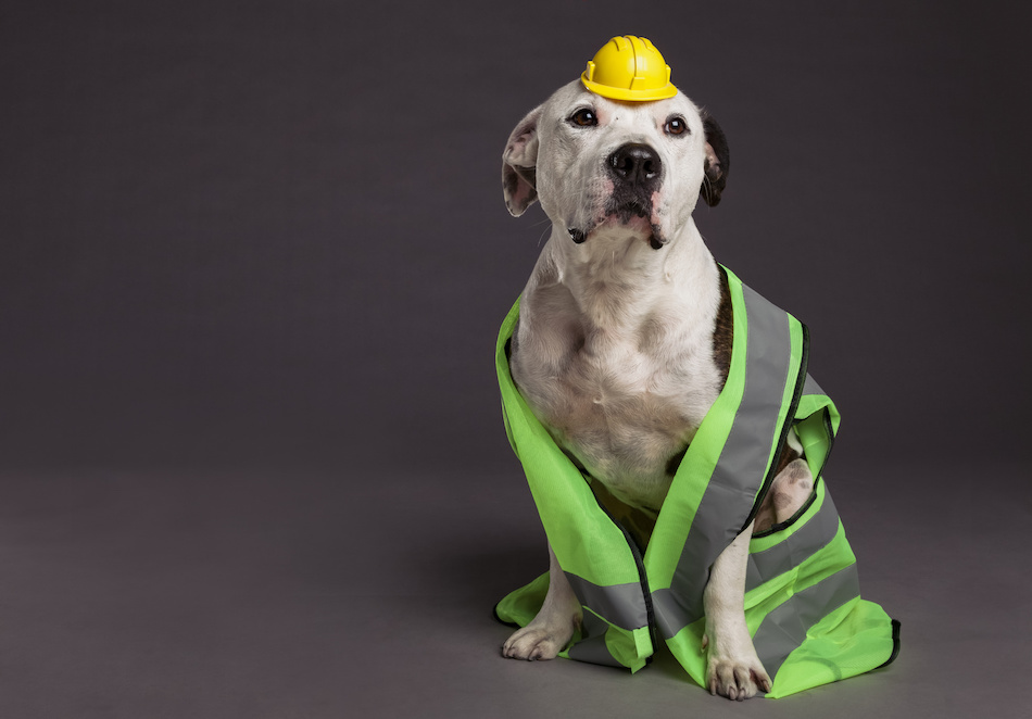 Pet Safety During Remodeling