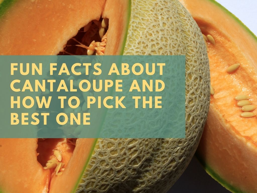 Did you know cantaloupe is in season right now through the month of September in southern Maryland?