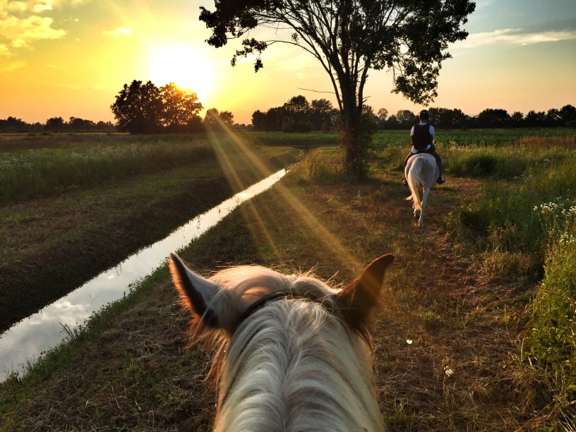 Horse and Equestrian Property in Southern Maryland - Farms and Ranches
