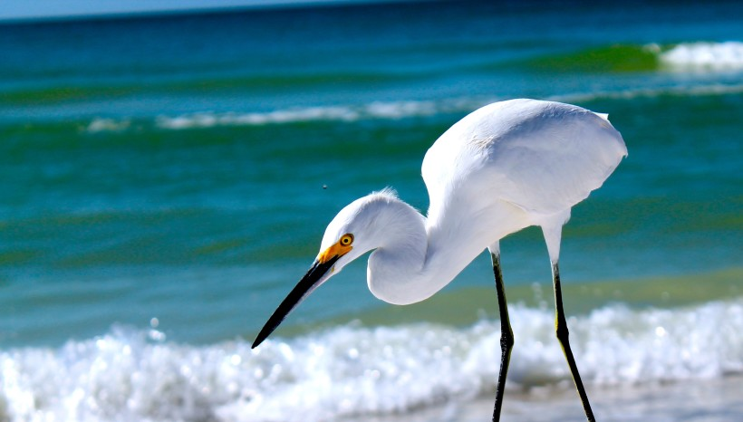 Marco Island FL Homes & Real Estate