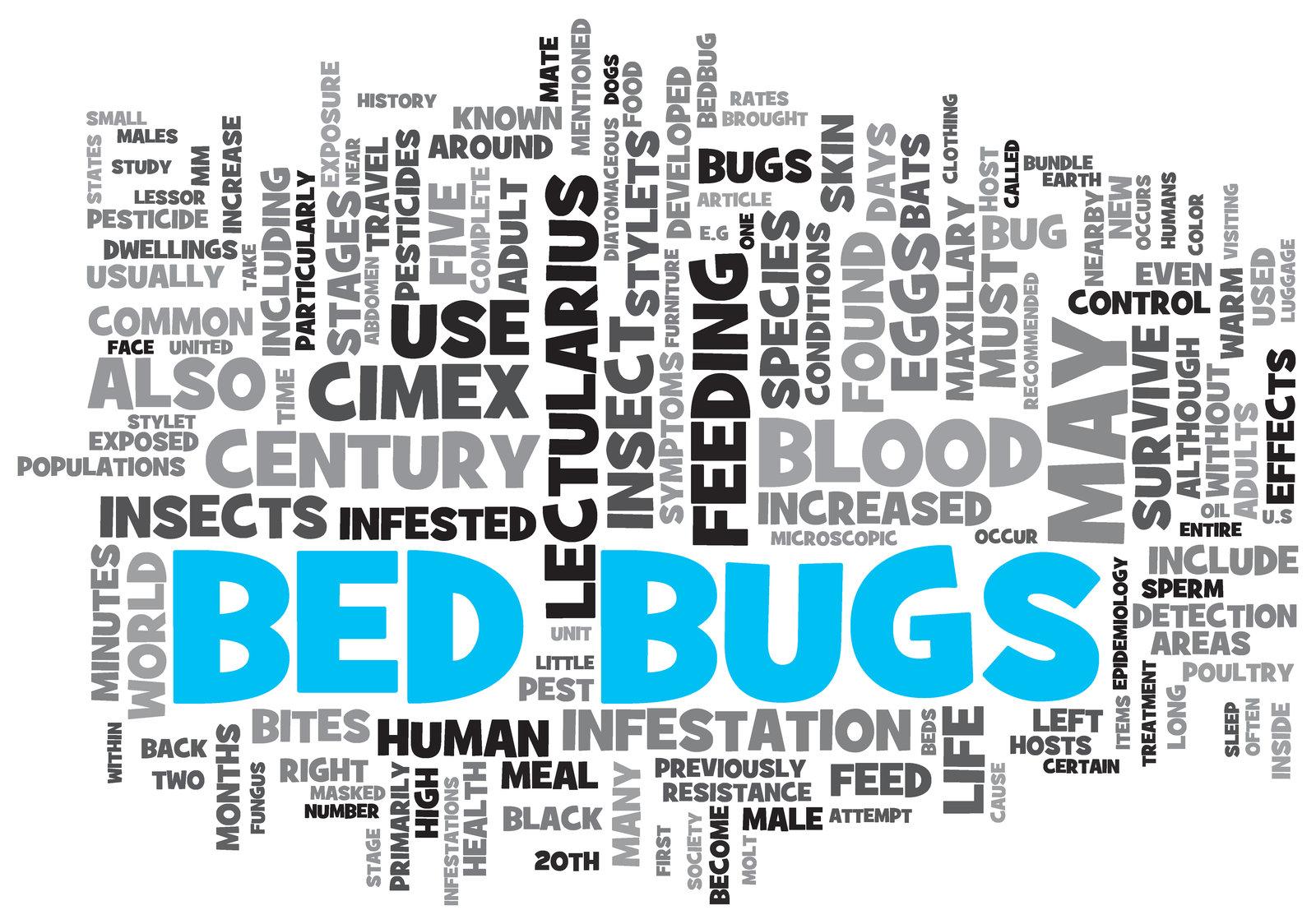 bedbug infestations can happen in a scottsdale home