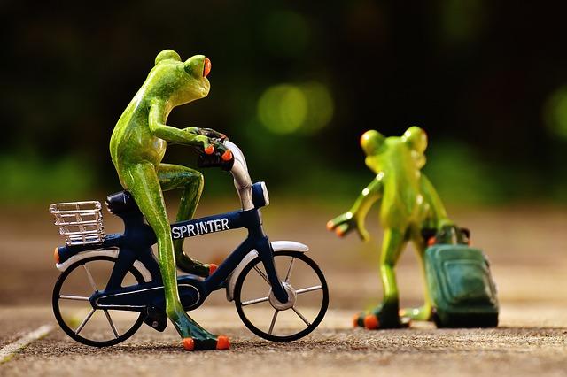 frogs leaving scottsdale AZ on a bike