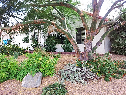 pretty landscaping on a scottsdale home