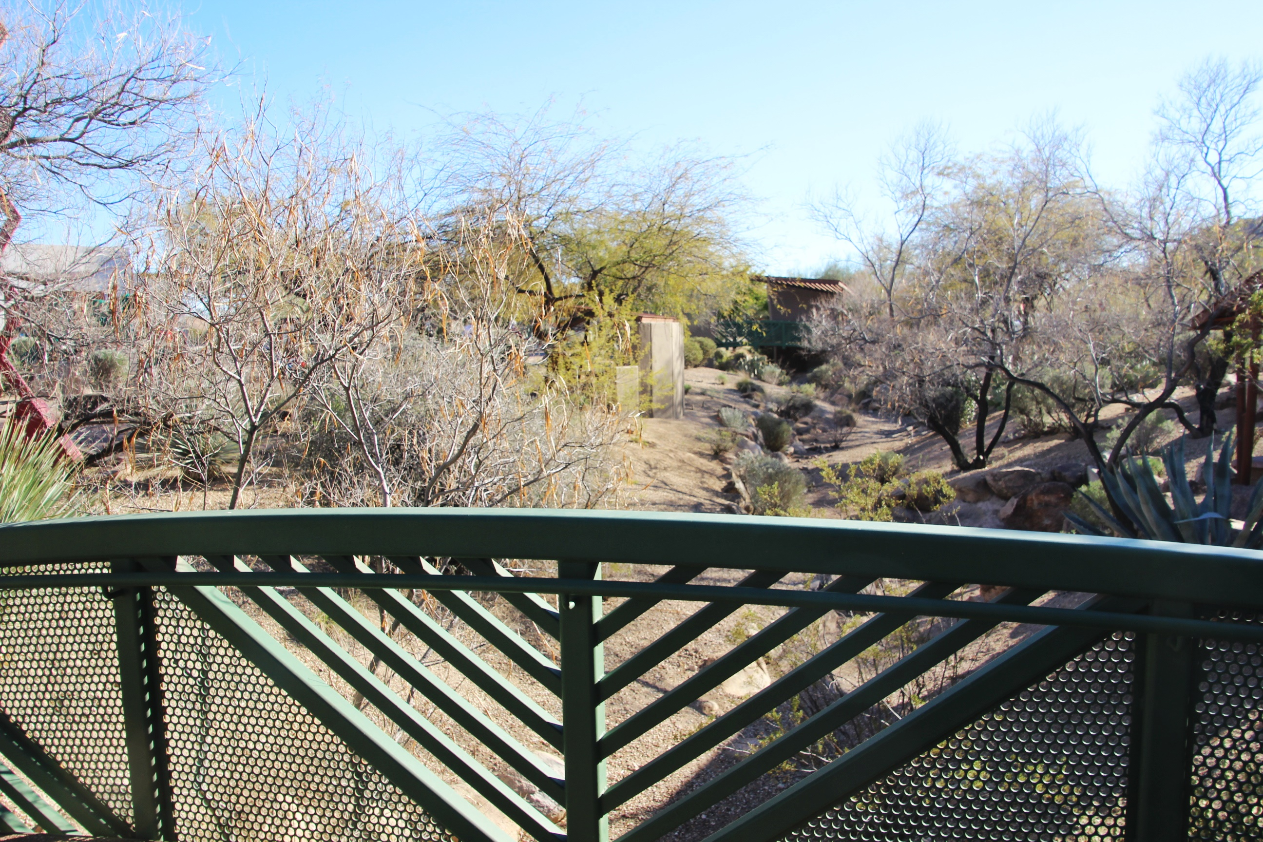 view from the bridge at the desert gardens