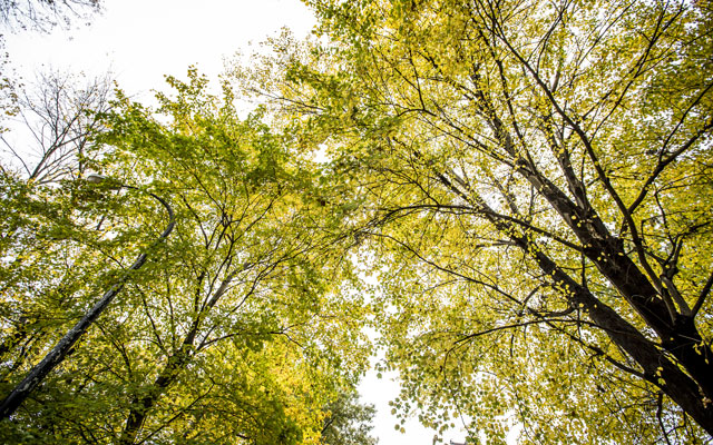 Louisville Trees