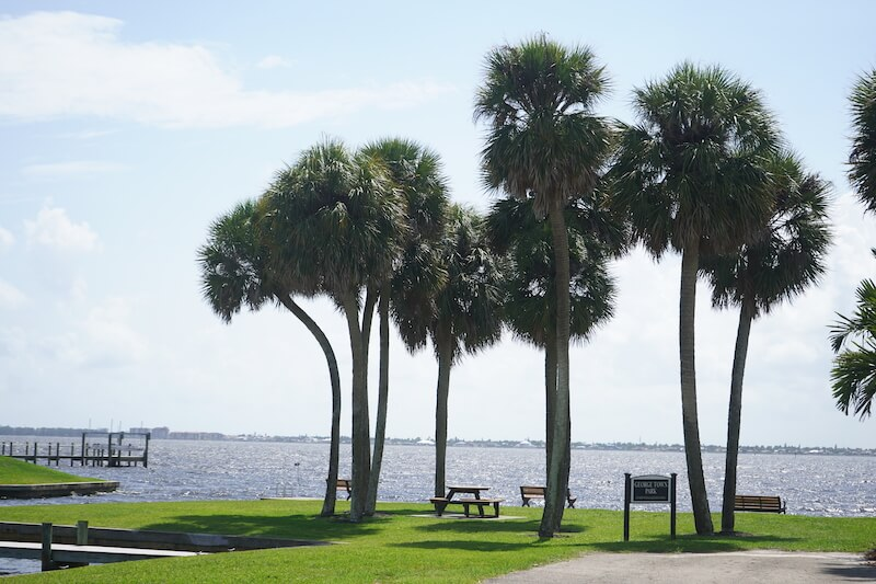 George Town Palm Trees in Fort Myers, Florida