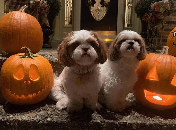 Cute Halloween Dogs