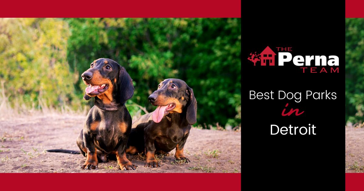 Best Dog Parks in Detroit