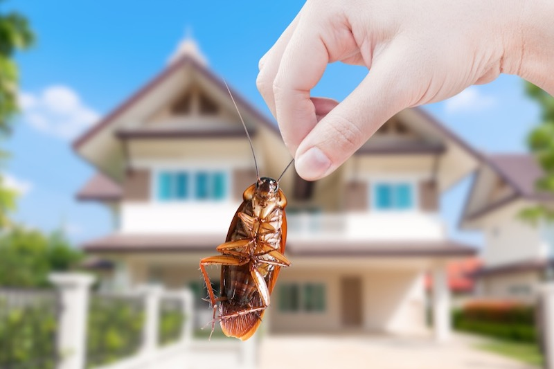 How to Remove Cockroaches From Your Home