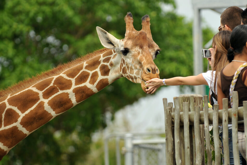Ready for a Day of Fun and Learning? Head to the Dazzling Detroit Zoo
