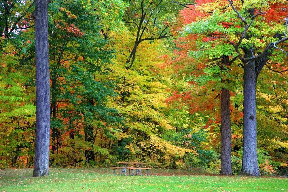 Novi Michigan Homes for Sale