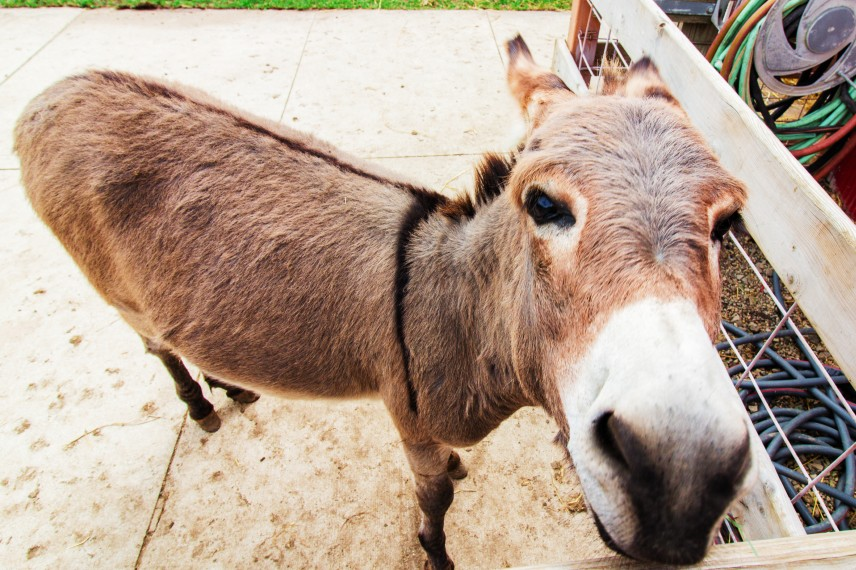 Friendly Donkey at Blakes Orchard and Cider Mill