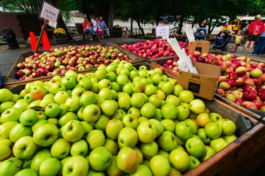 Fresh apples on display outdoors at Franklin Cider Mill, Michigan