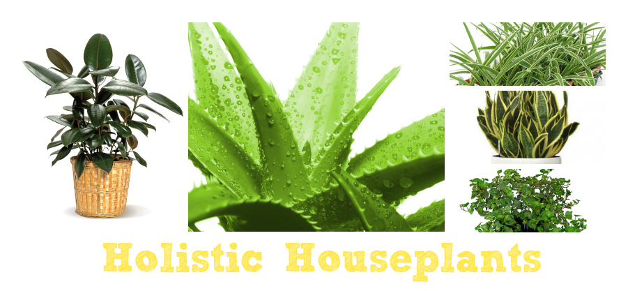 Holistic housplants