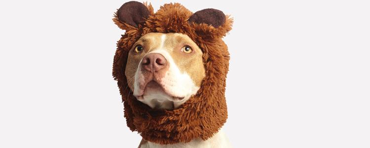 Dog Show McKinney