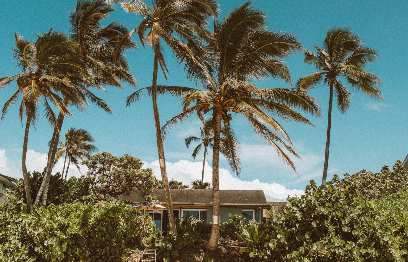 Palm Trees & Sky