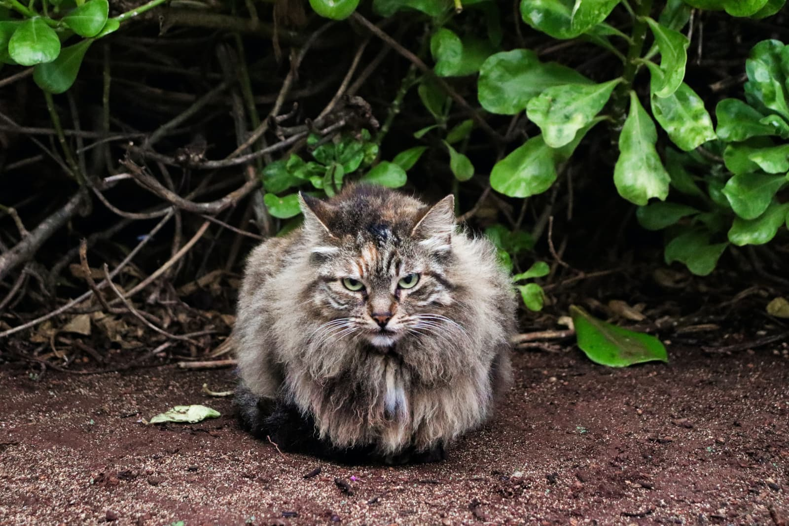 Grumpy Cat With Greenery Behind