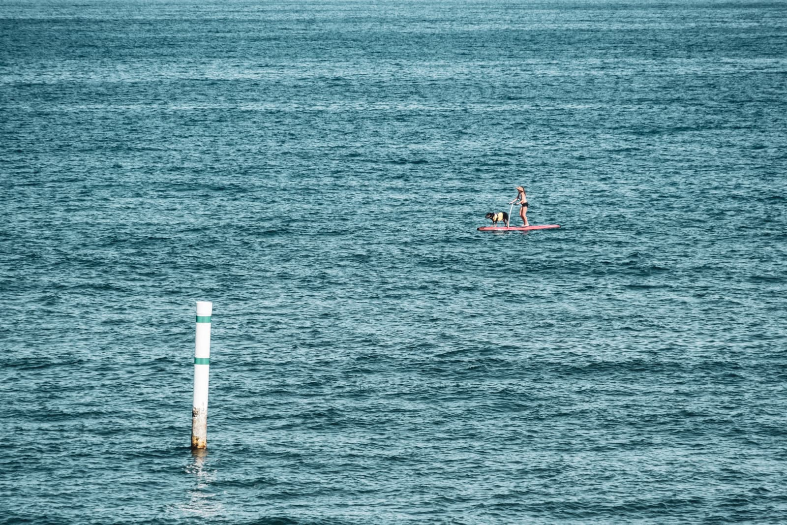 Woman And Dog On Paddleboard