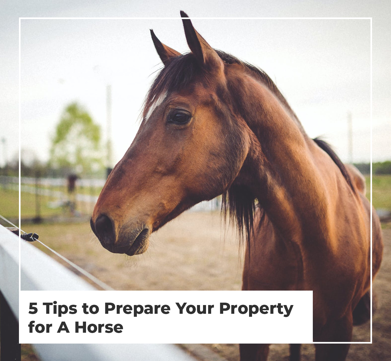 5 Tips to Prepare Your Property for a Horse