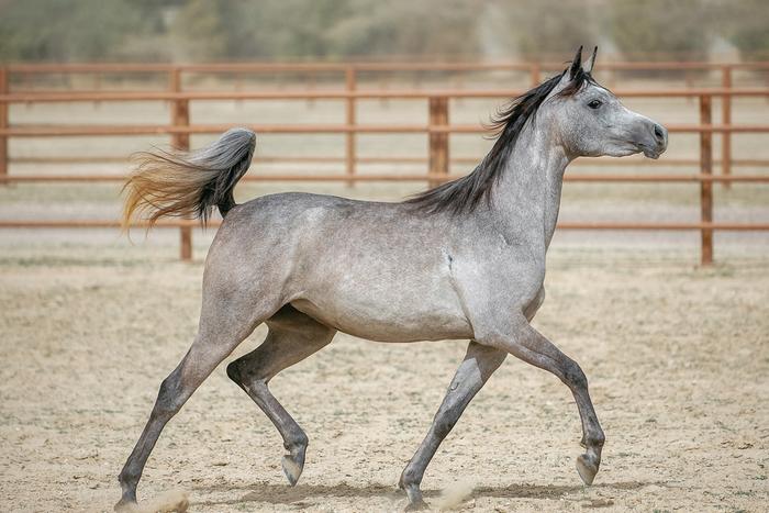 Parker, Co Horse Property for Sale