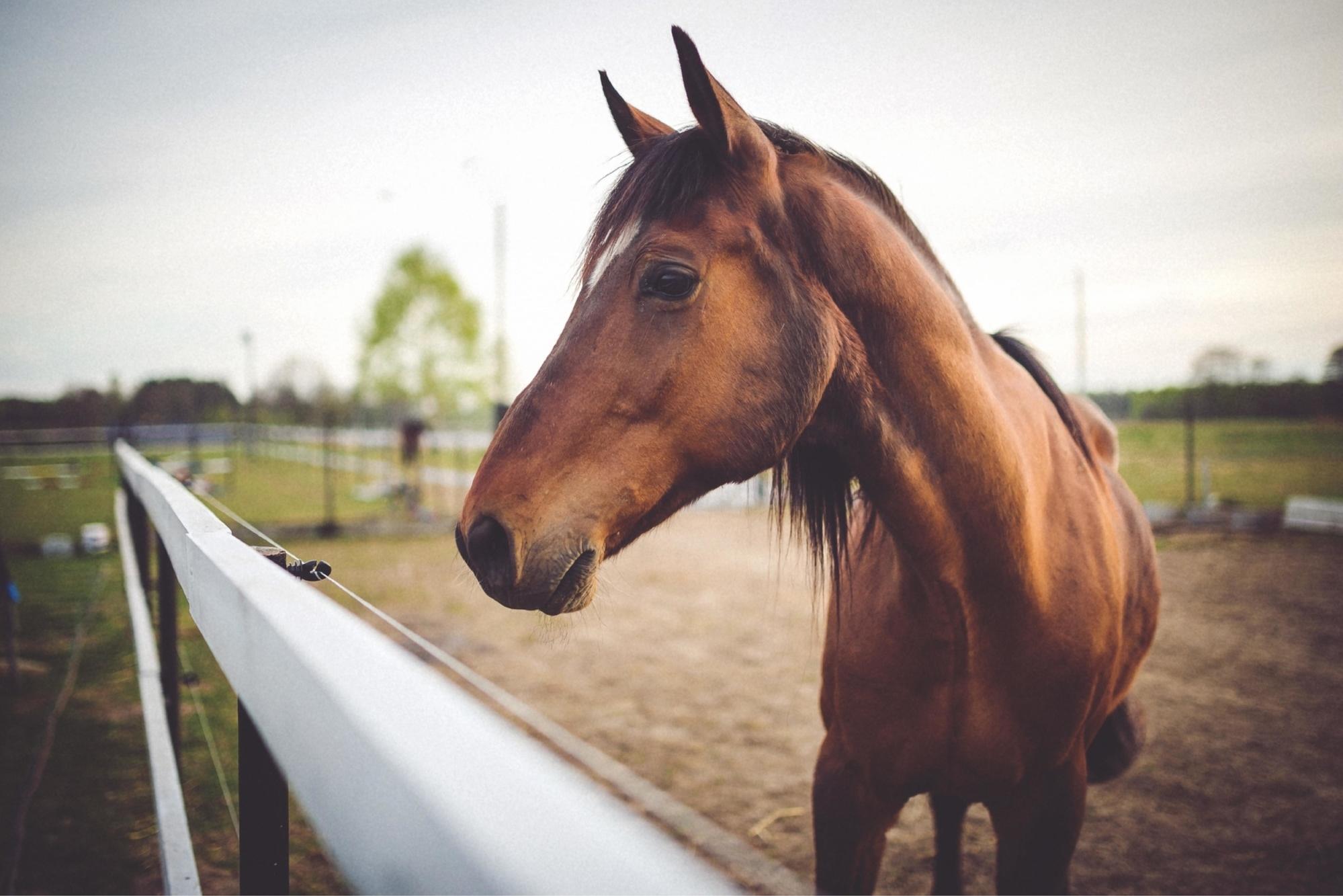 Sedalia Horse Property for sale