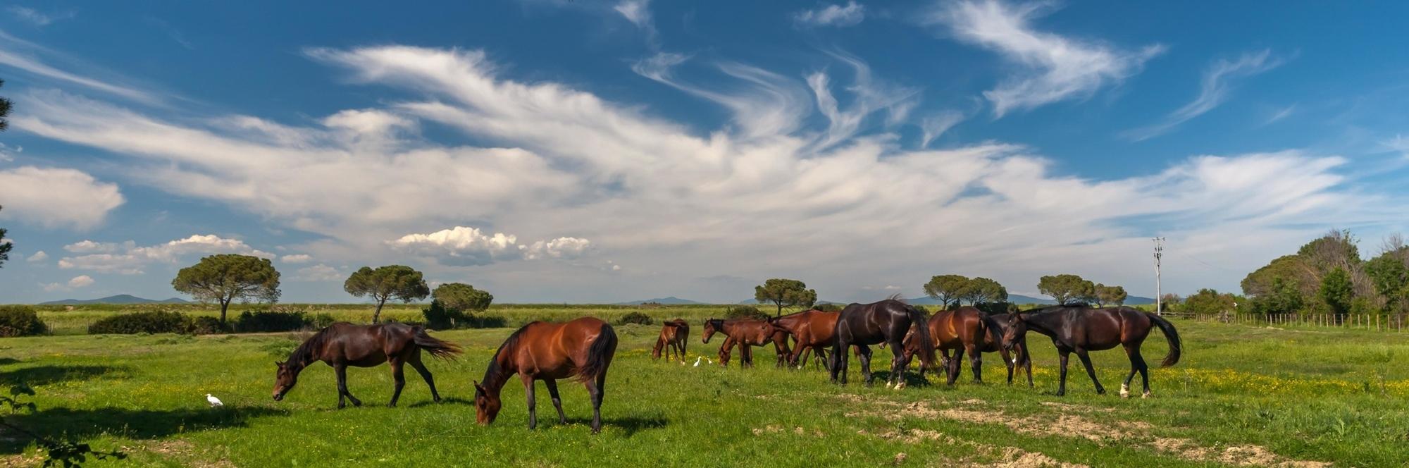 Horse Property Homes with Land in Sadalia, Colorado