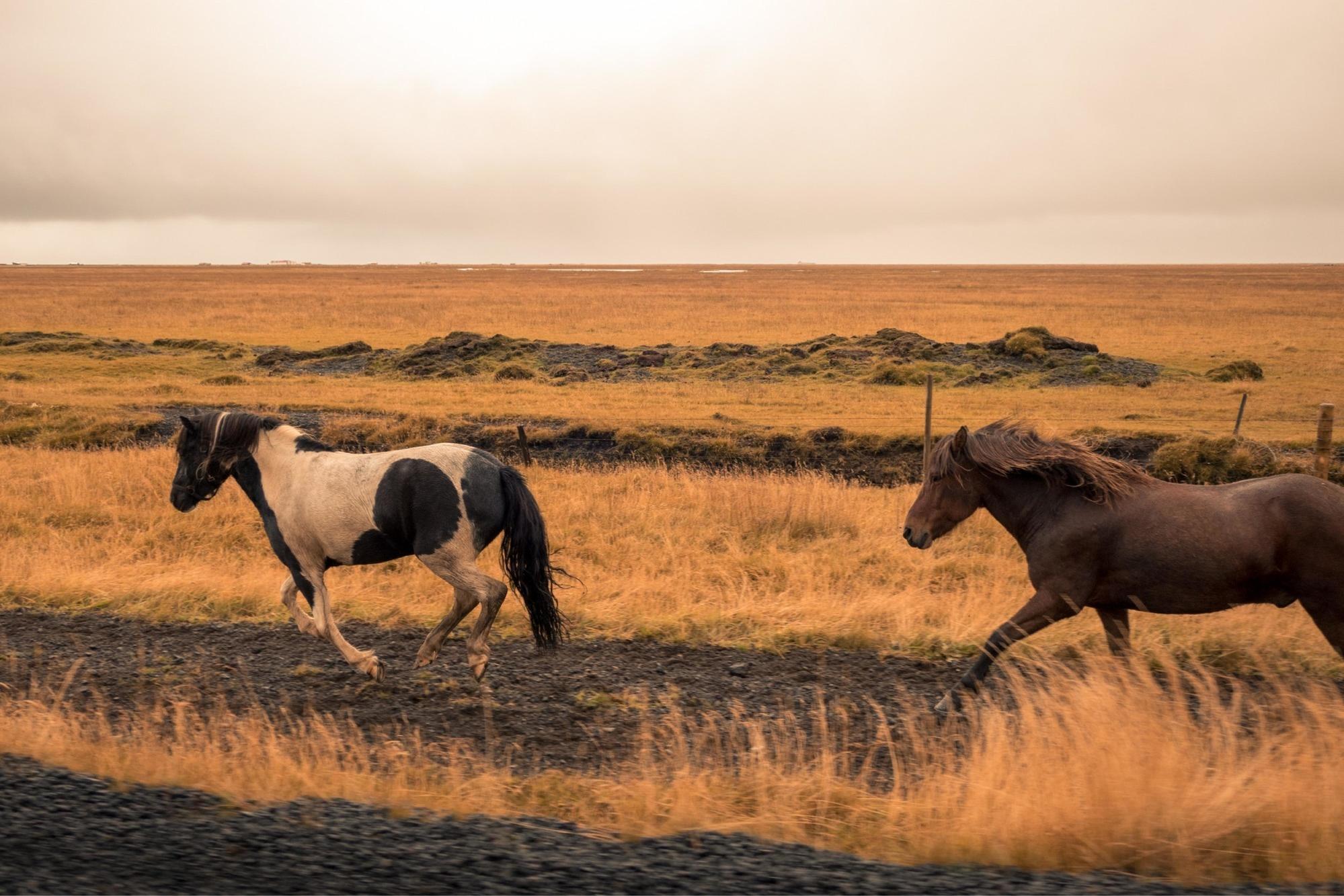 Parker, Colorado Horse property for Sale Kenna Real Estate