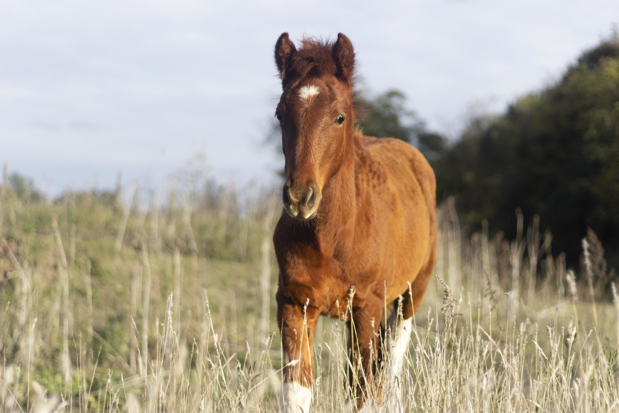 A guide to toxic plants for horses in Colorado