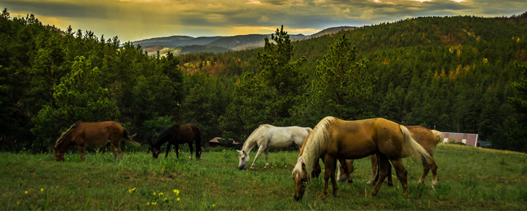 Tips for Your Horse Property