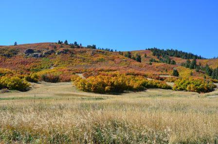 Denver Land for Sale