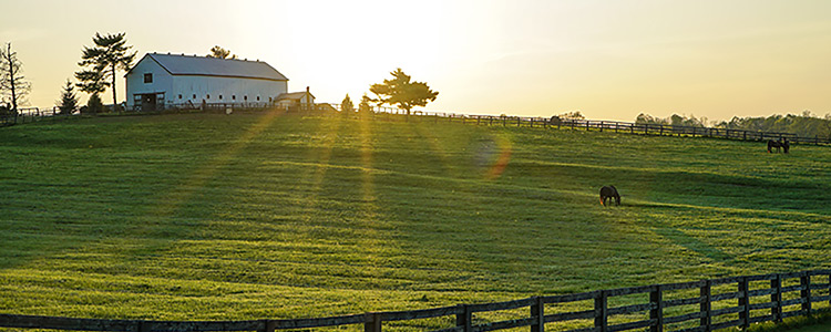 Guide to Buying a Horse Property