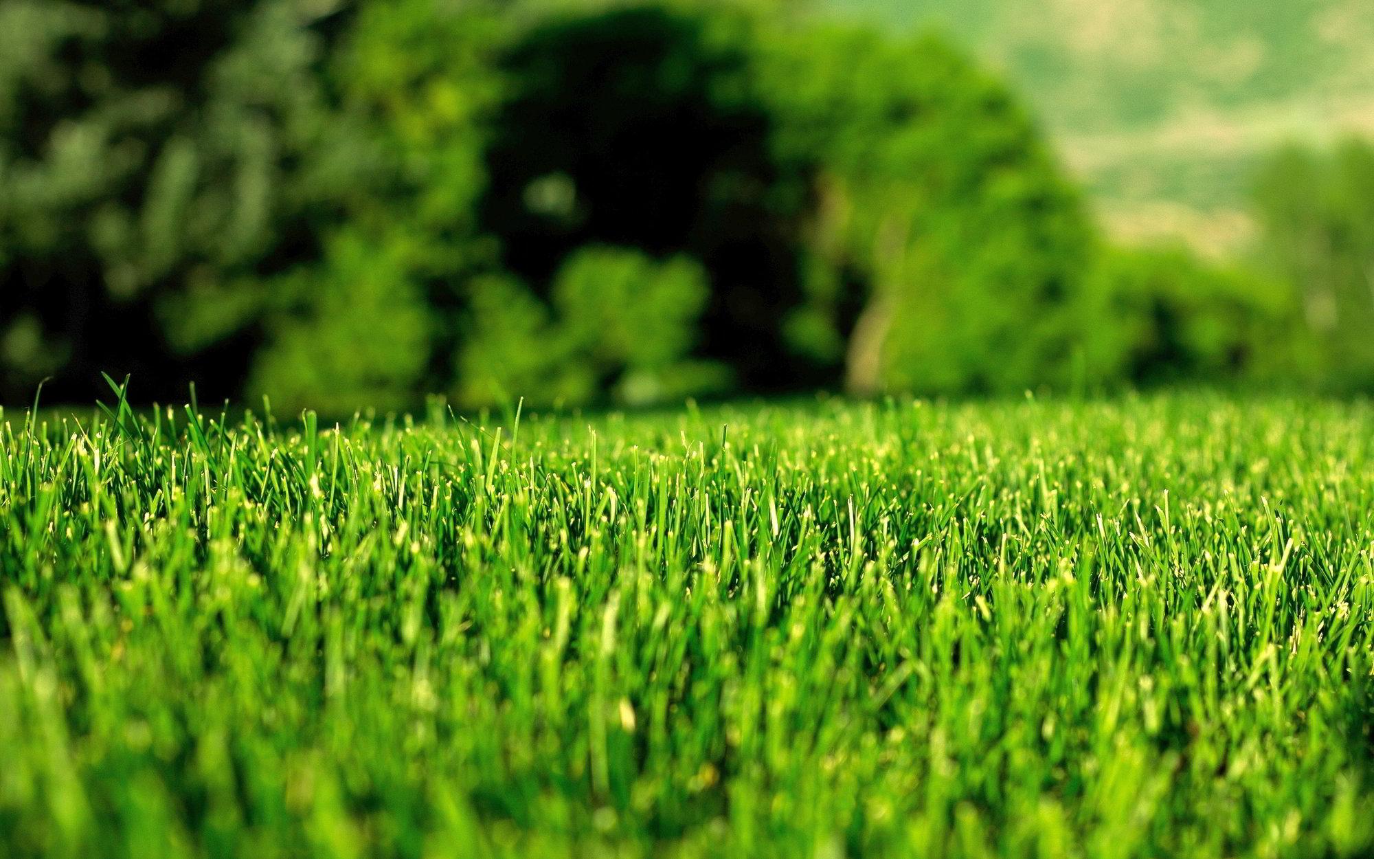 Denver Lawns