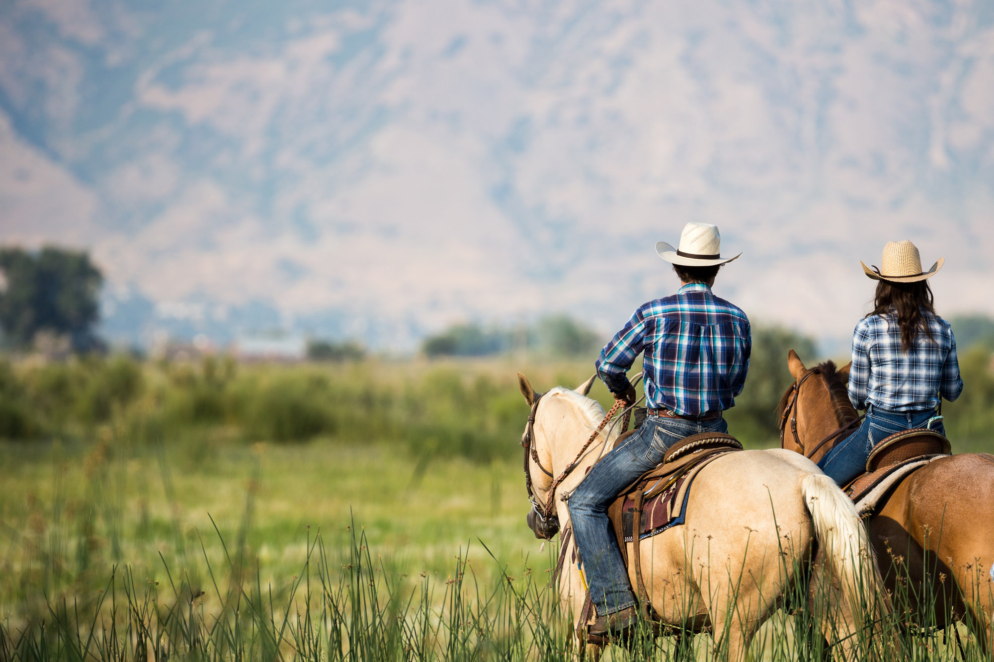 Fort Collins Horse properties for sale