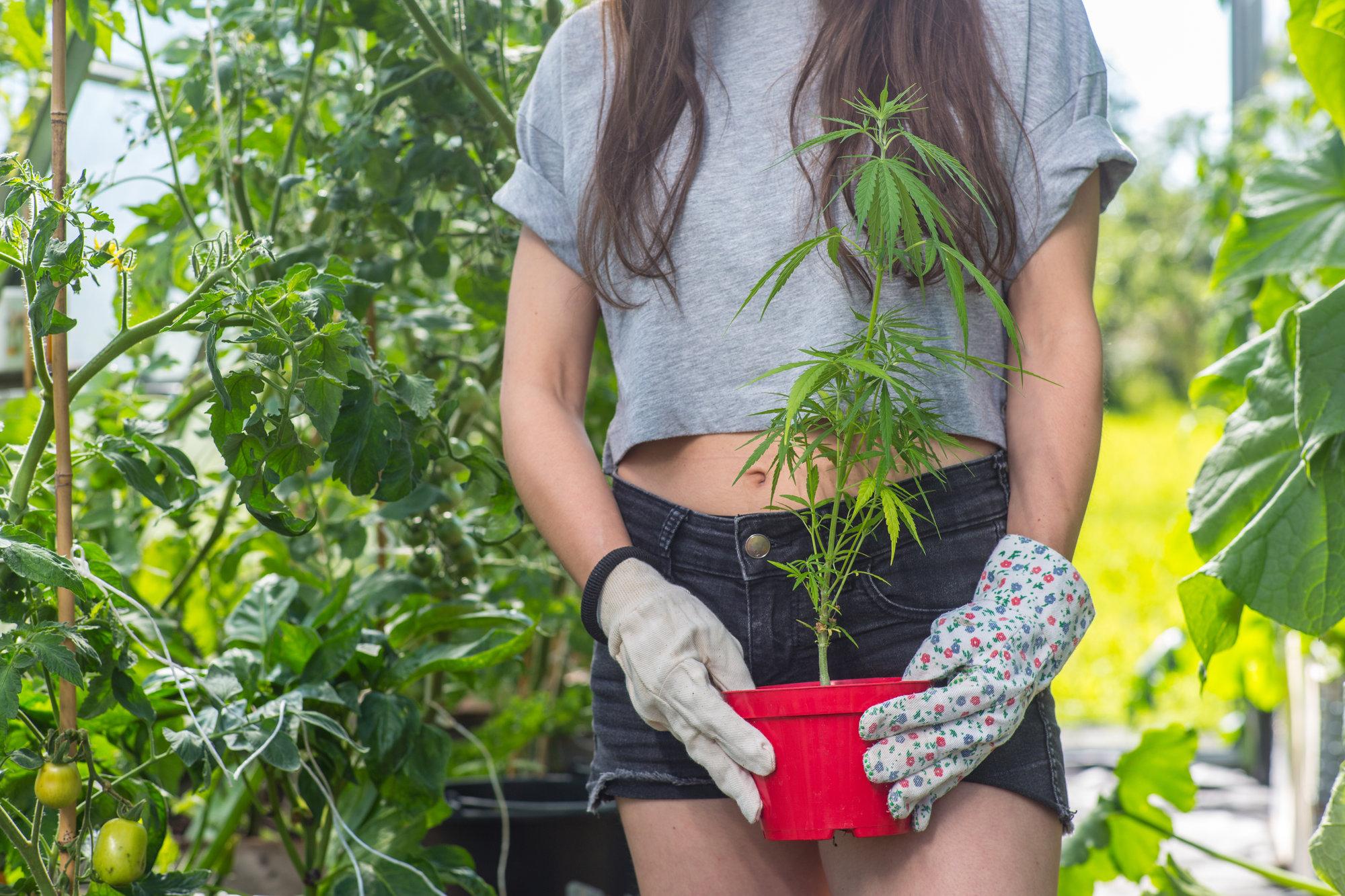Grow Marijuana in your Denver, Co House